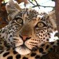 spottedcat